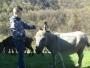 Alen Džindo zbog bolesti sina otvorio farmu magaraca