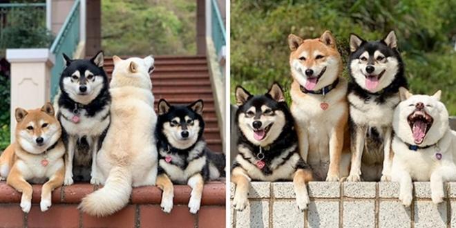 """Svijet se smije psu koji """"uništi"""" gotovo svaku grupnu fotografiju"""
