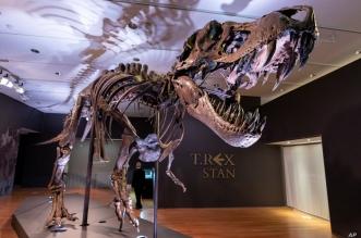 Jedan od najvećih skeleta T-rexa uskoro na prodaji