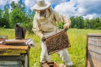 U Hercegovini počinje proizvodnja pčelinjeg otrova