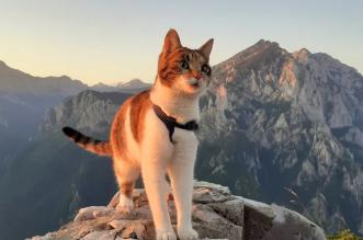 Upoznajte Maciku, prvu BH. mačku planinarku: Popela se na najviši vrh Austrije