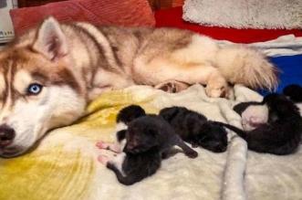 Hrabri pas spasio sedam mačića, a sada se o njima i brine